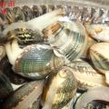 COME SPURGARE LE VONGOLE ED I MOLLUSCHI IN[...]